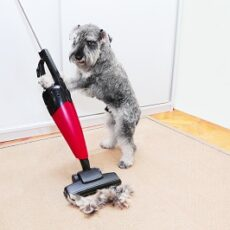 Your Guide to the Bissell Pet Hair Eraser Turbo