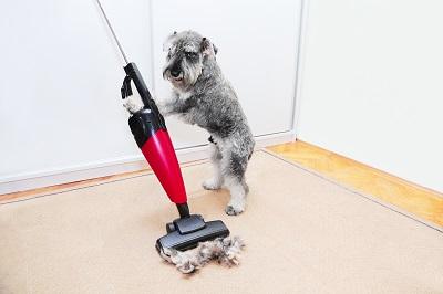 Vacuuming Pet Hair